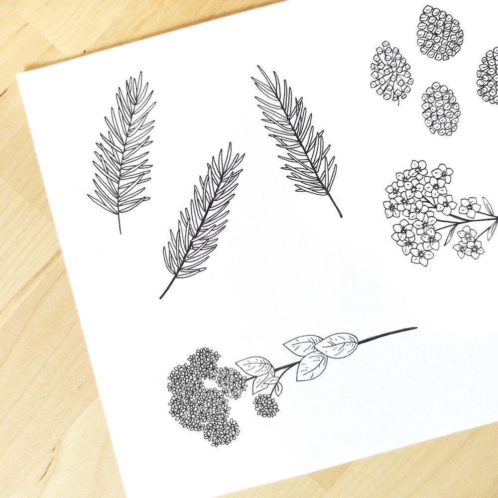 Meadow & Pine Photography - Logo and Branding design for small businesses by Bea & Bloom Creative Design Studio