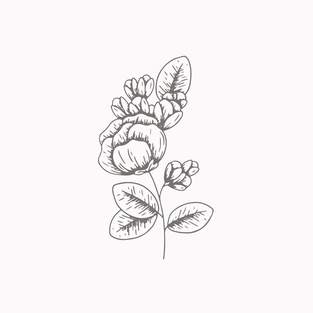 Bea & Bloom Creative Design Studio - #52weeksofplants - Plant Illustrations