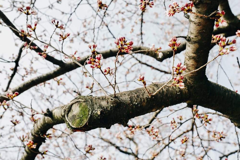 20170319-Photo Mar 19, 14 42 42.jpg