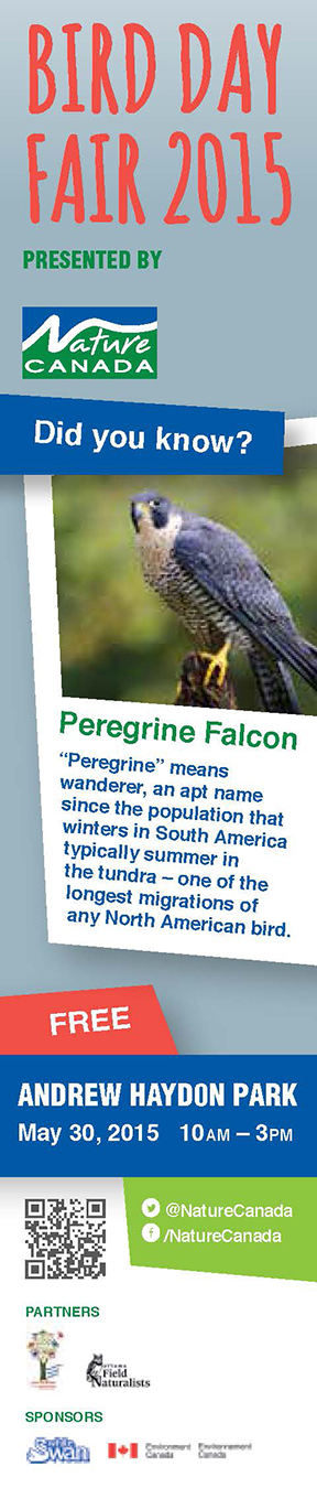 2015-03-17-BirdDayBookmark-falcon-VIEW_Page_1.jpg