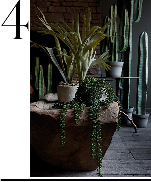 abigail-ahern-cactus