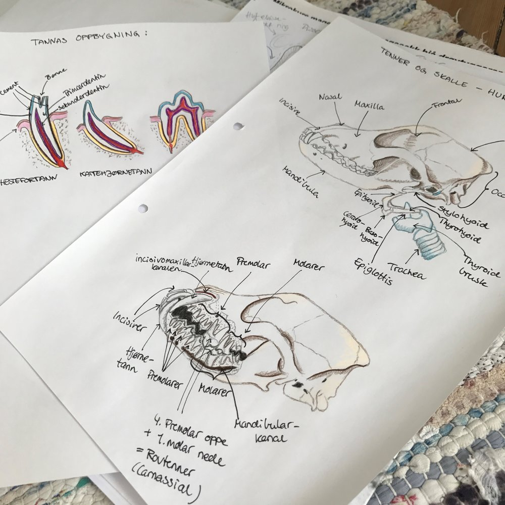 My anatomy and physiology work routine — Vet to be
