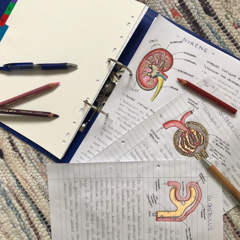 studyarea.jpg