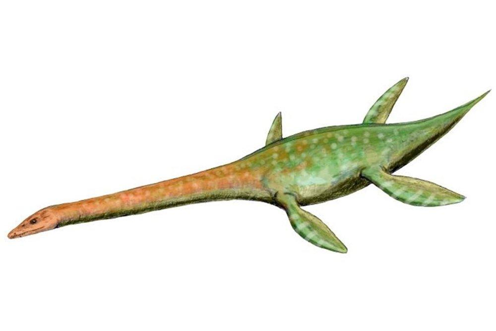 Attenborosaurus conybeari.jpg
