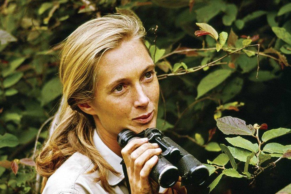 Jane Goodall 2.jpg