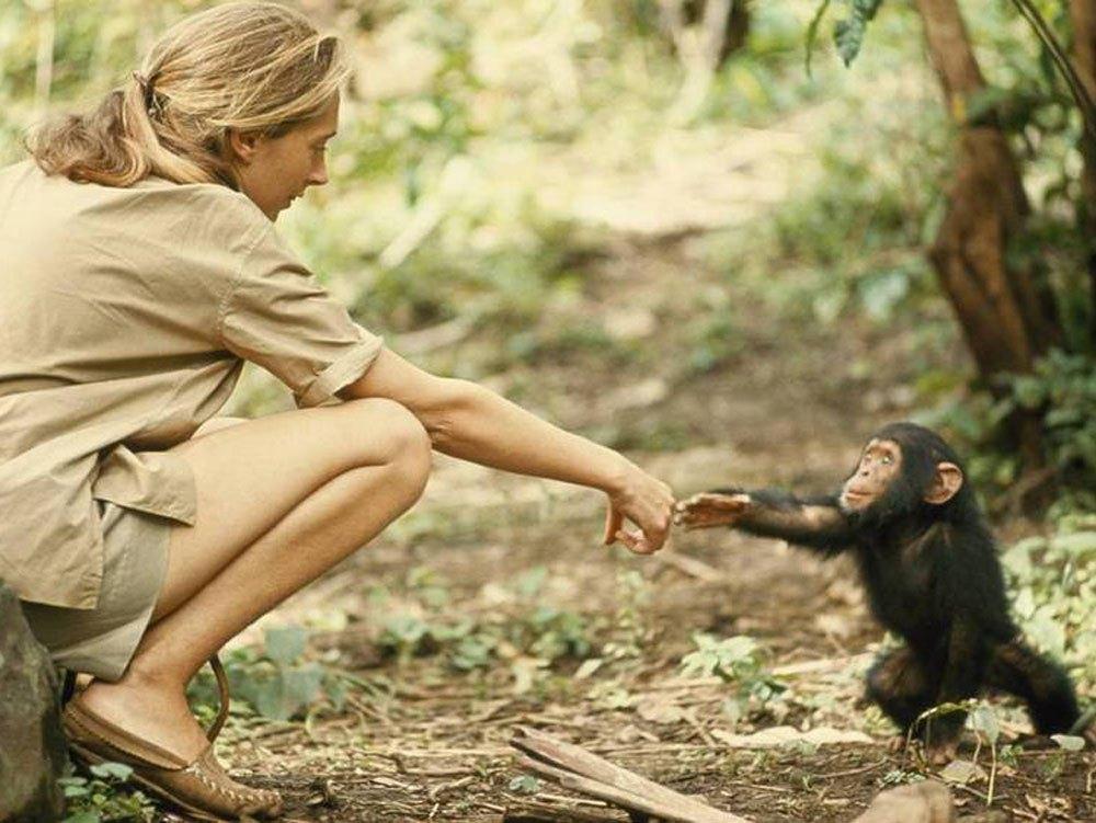 Jane Goodall 4.jpg