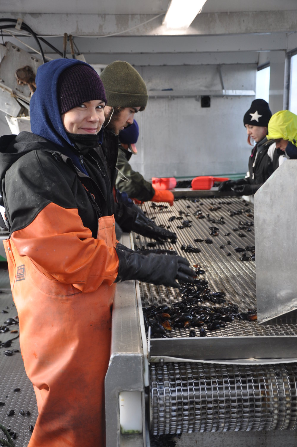 The process of inspecting mussels before they are weighed and packed takes place regularly so that our customers are guaranteed the freshest of shellfish available. The products we deliver not only include our mussels, but also Manila Clams and a full line of oysters--all fresh from the water.