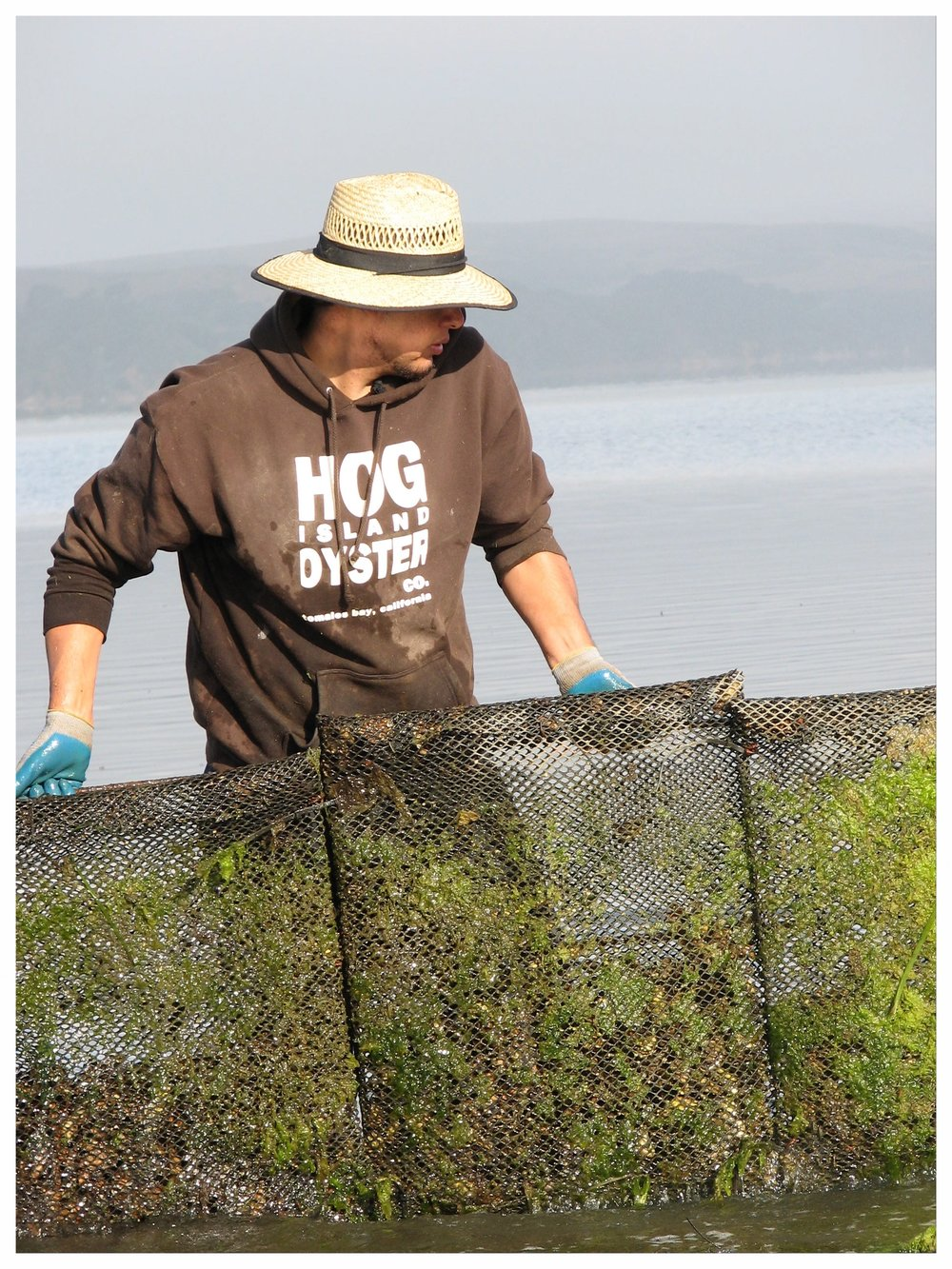 Photo Credit Brenna Schlagenhauf. Courtesy Hog Island Oyster Co._.JPG