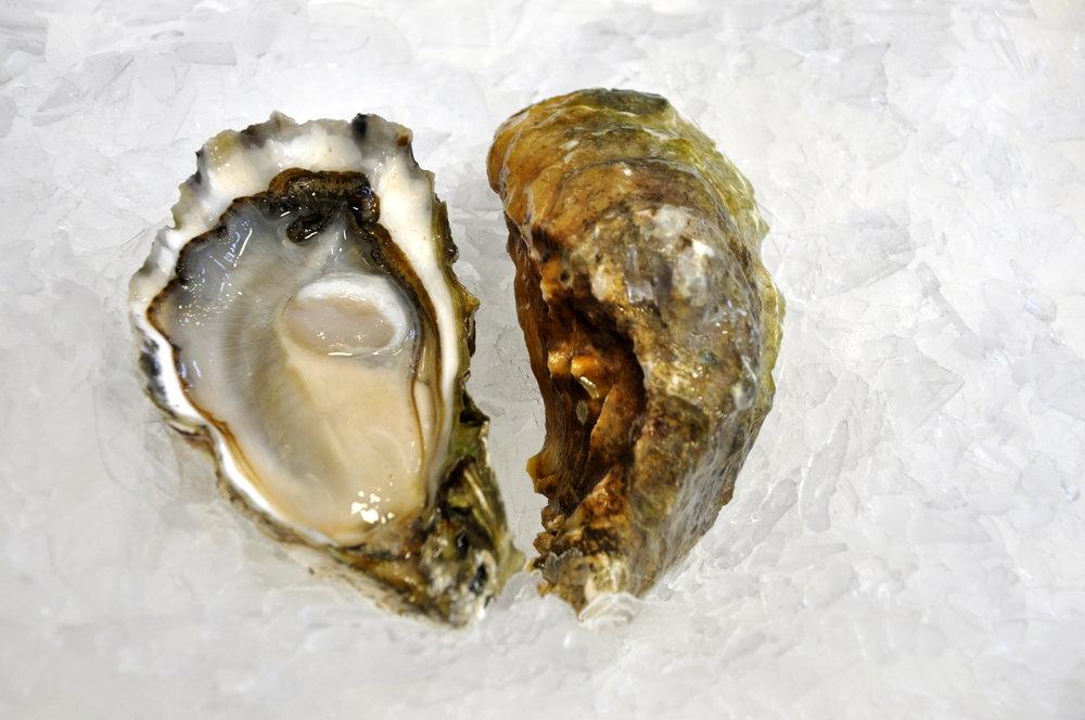 Dabob Bay Oysters.JPG