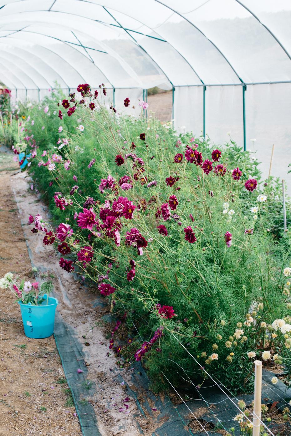 Ispirate alla natura e al susseguirsi delle stagioni le sorelle hanno iniziato raccogliendo i semi dei fiori selvatici presenti nella zona.