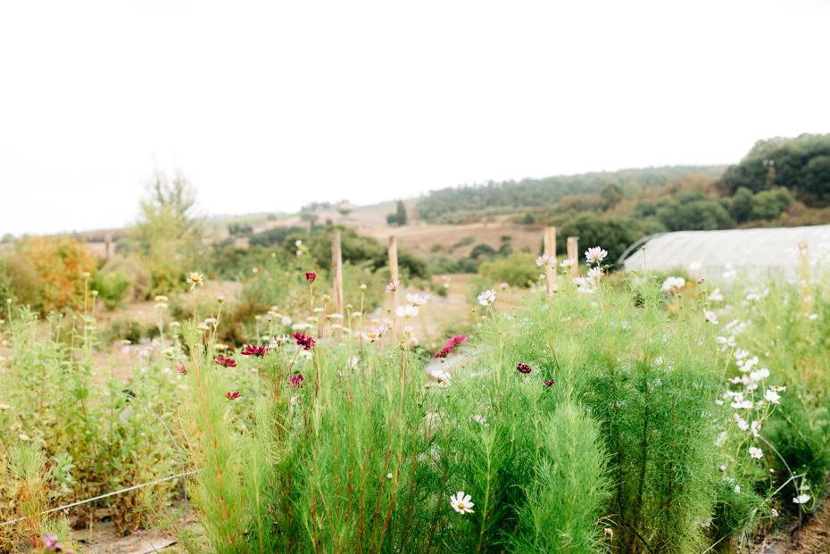 la Flower farm si inserisce perfettamente con il territorio
