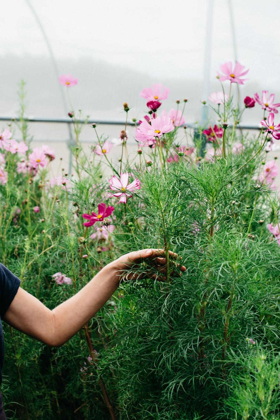 Stagionalità, economia locale e memoria sono i principali temi su cui si fonda il lavoro di Puscina Flowers