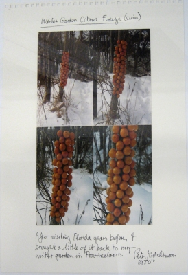 157_winter-citrus-freeze72dpi.jpg