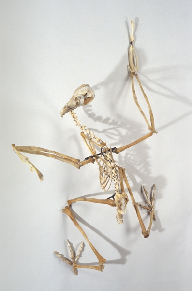 "Christy Rupp, ""California Condor, California"", Fast food chicken bones, mixed media, 2007, 59 x 44 x 27 inches"