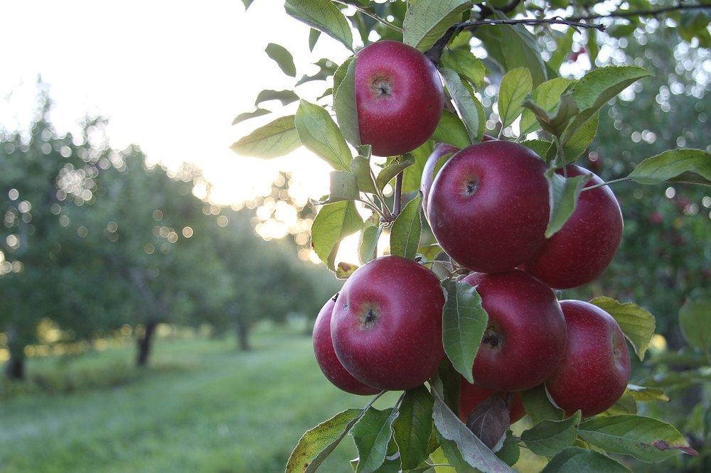 apples-1699640_1280.jpg
