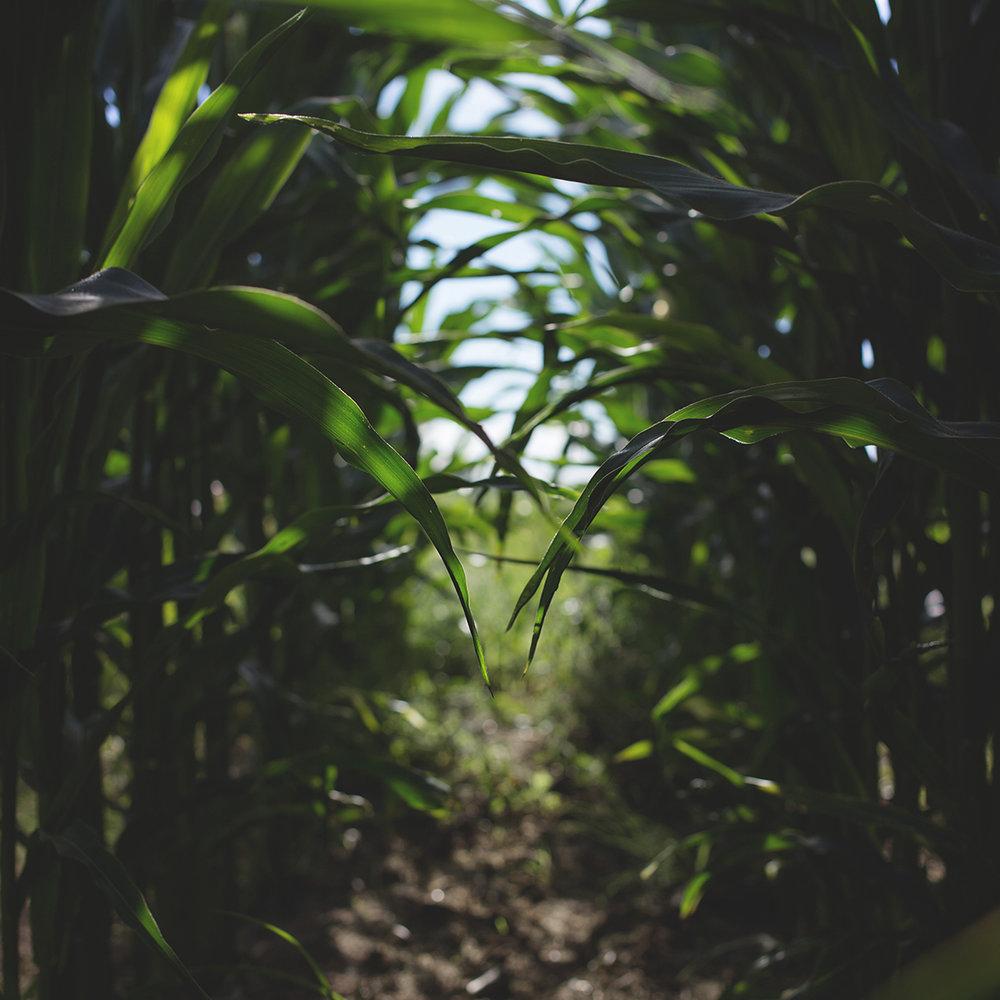 arg-crop.jpg