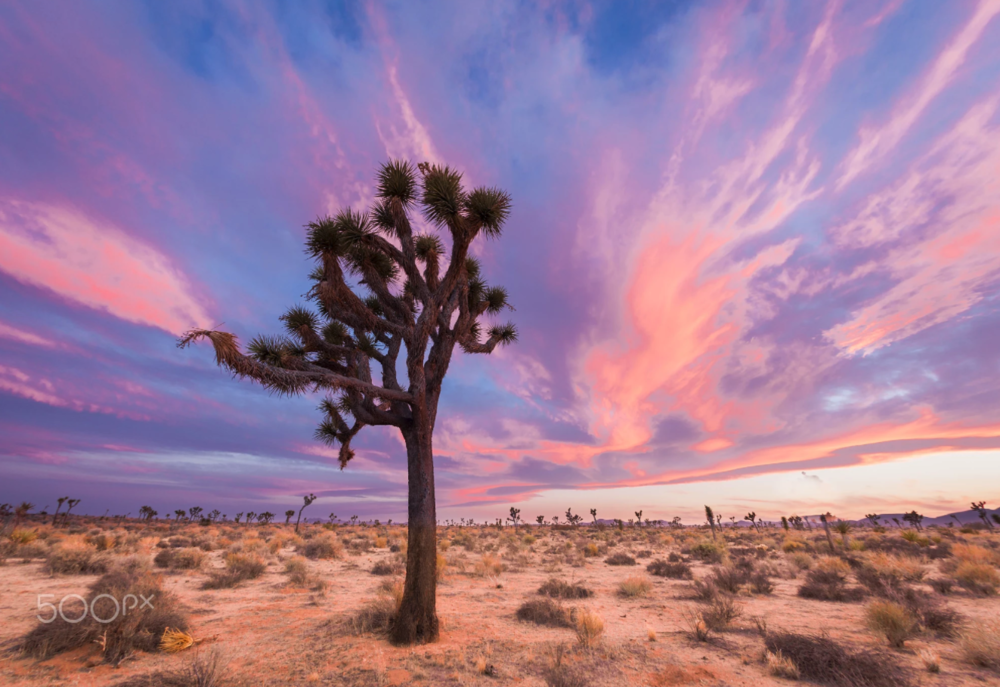 A spectacular desert sunset in Joshua Tree National Park, by: Laurie Hernandez