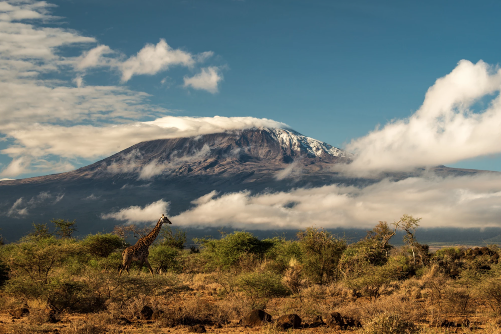 Credit: Mount Kilimanjaro, by Dale Johnson