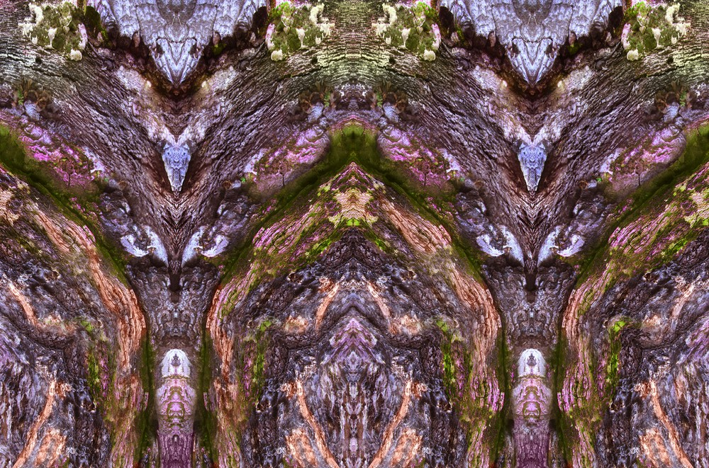 tree portrait 5d_size changed_composition_altered.jpg