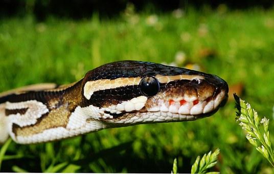 snake-390174__340.jpg
