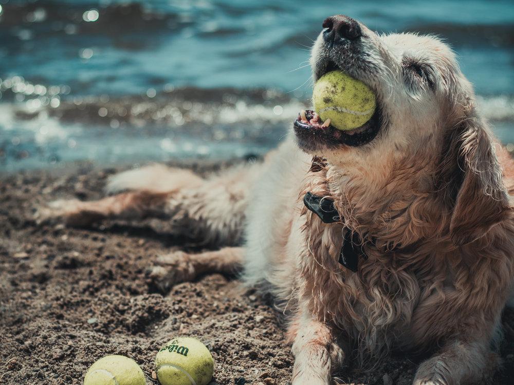 august 20. dog days