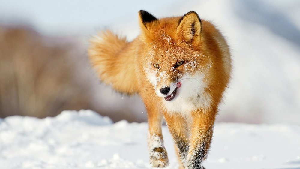 wild_mammals_hastingsmuseun.jpg