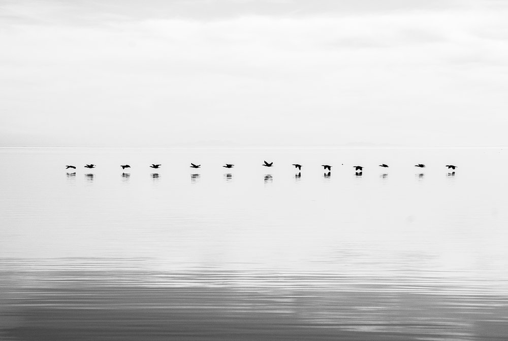 FineArt - Birds.jpg