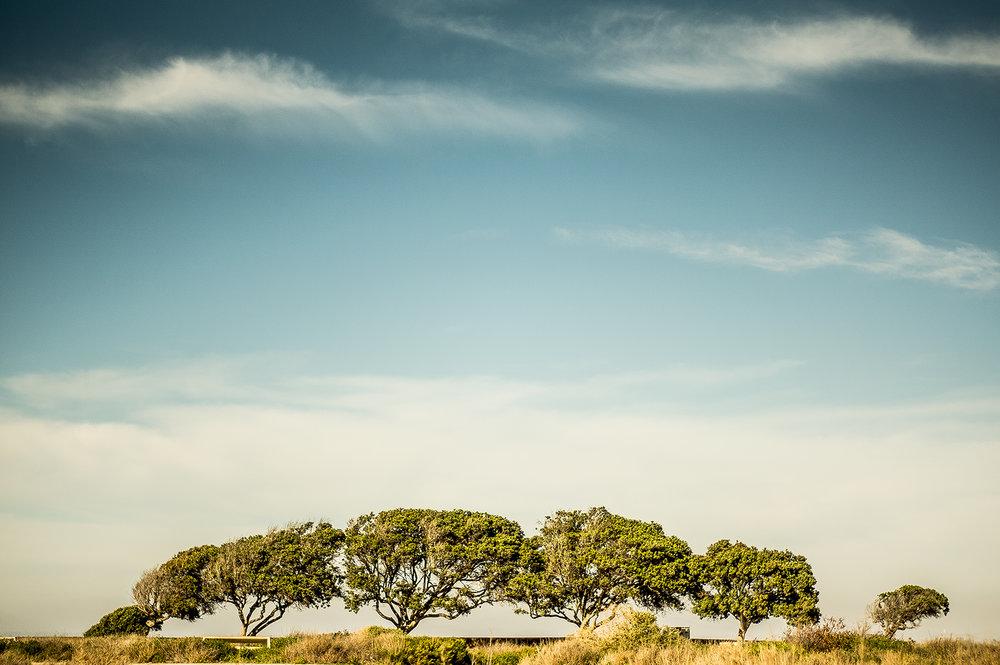 FineArt - Mexico Trees.jpg