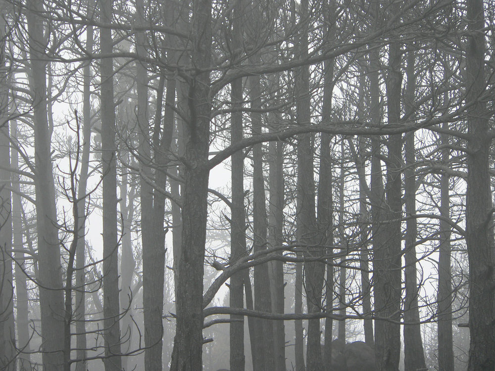 fire trees 01.jpg