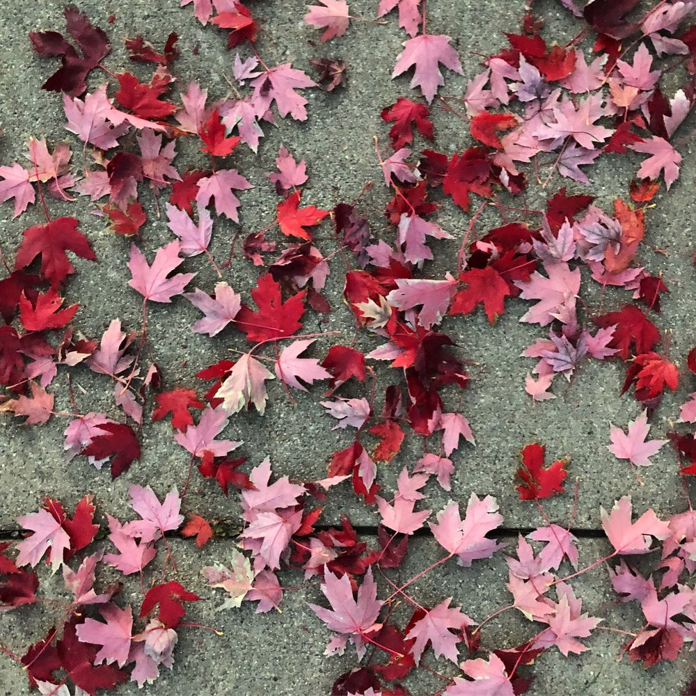 Fall leaves 01.JPG