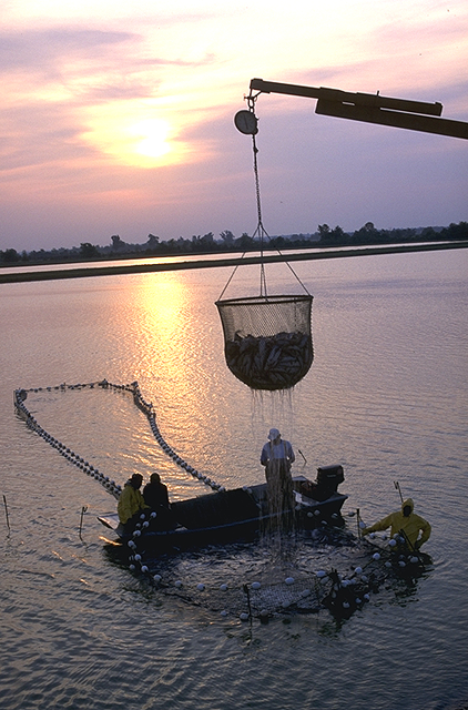 Delta Catfish Farming(Ken Hammond)