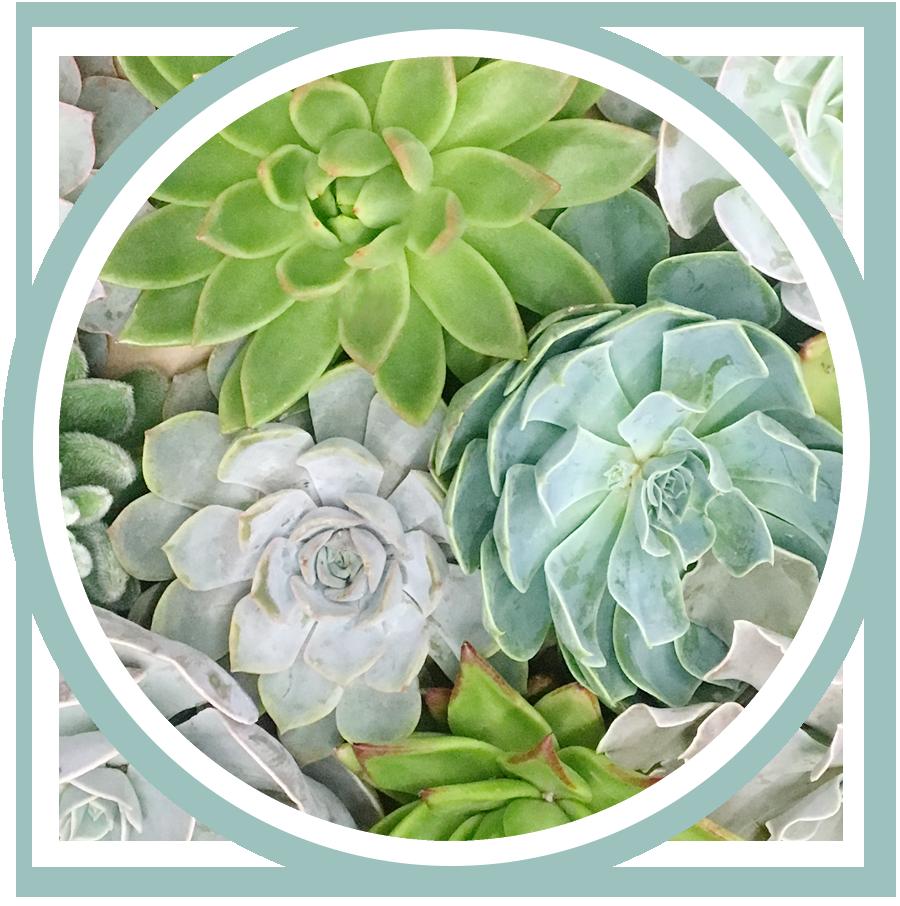 kate_lauren_studios_succulent_succulents.jpg
