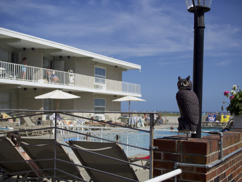 A plastic owl watches sun-bathers at a motel near the beach in Wildwood New Jersey, September 2015.