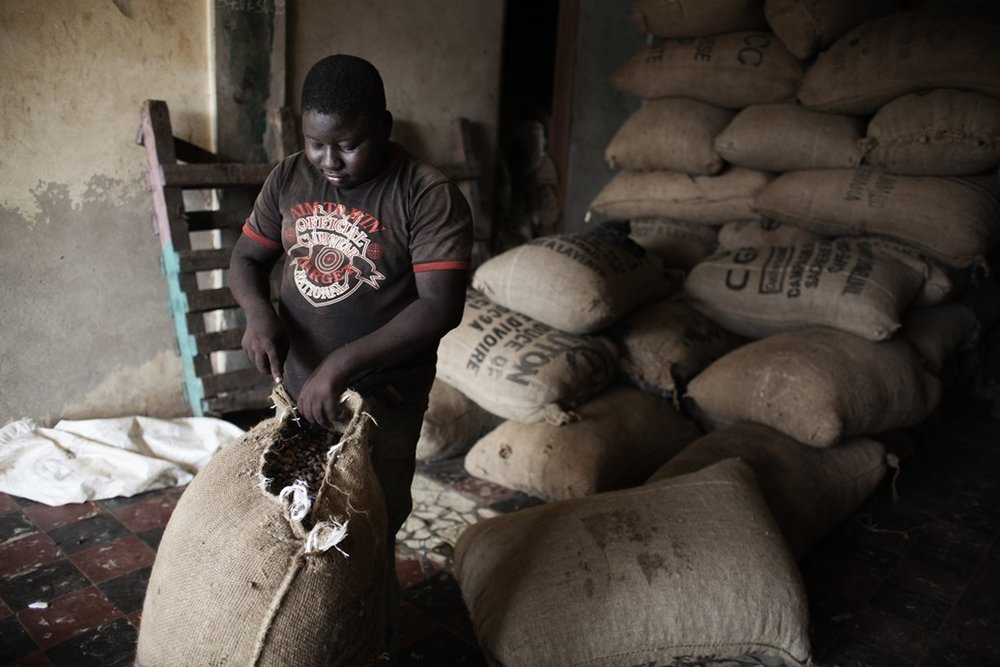 A teenager works in a small cocoa firm in Aboisso.SOURCE  MICHAEL ZUMSTEIN / AGENCE VU/REDUX