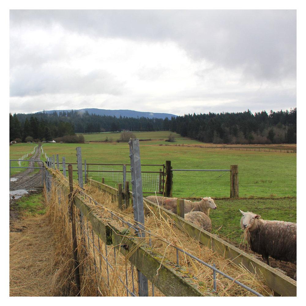 sheep_07.jpg