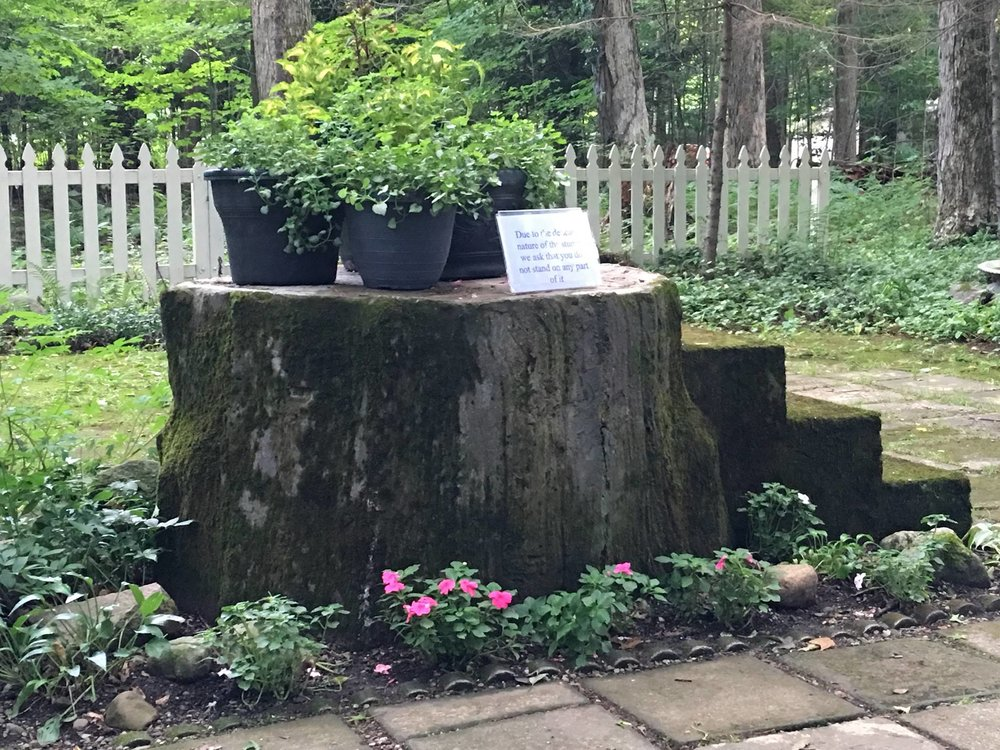 Santosha-Lily-Dale-Stump-Meditation.jpg