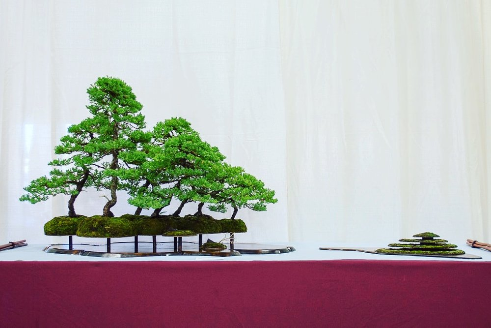 Forest display from 5th US National Bonsai Exhibition. Juniper forest on steel slab with mossed steel mountain accessory planting.