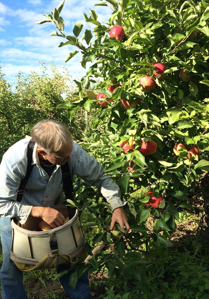 Rob Ten Eyck working on the Ten Eyck Orchard