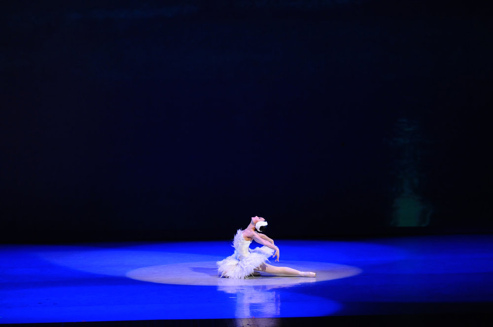 The Dying Swan  poignantly captures the final moments in a swan's life.