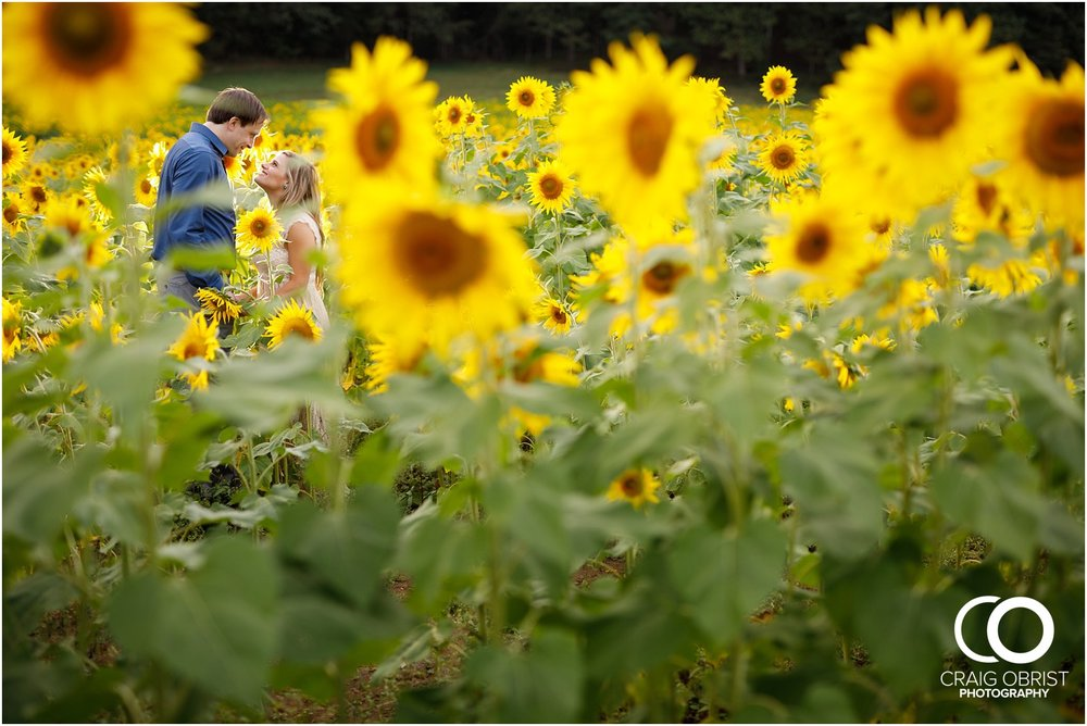 sunflowers fields north georgia engagement portraits wine vineyard_0035.jpg