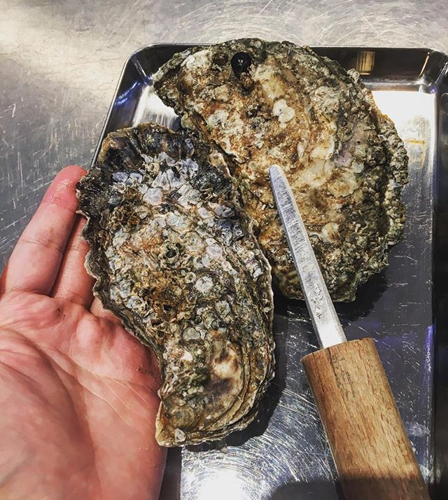 These almost a foot long huge oyster are from the coast of Oregon, only in omakase!  #omakase #oyster #oregon #pacificnorthwest #sushi #atonyc #soho #nyceats