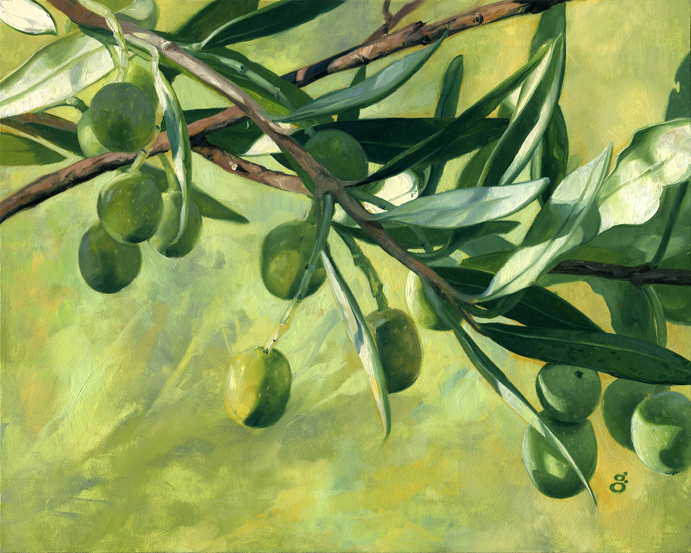 Frantoio Olives, Harvest 2015
