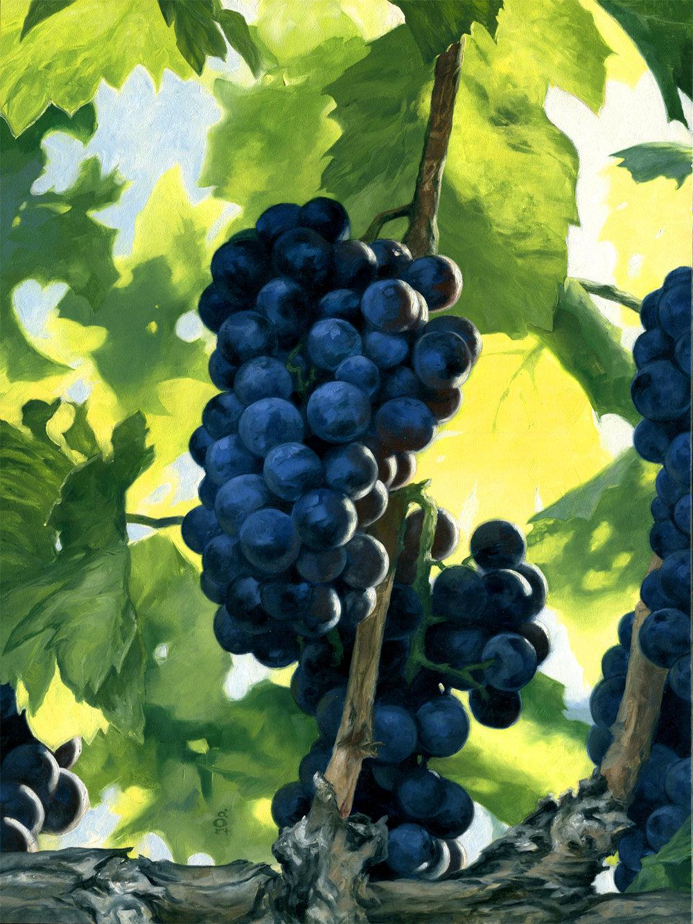 On the Vine