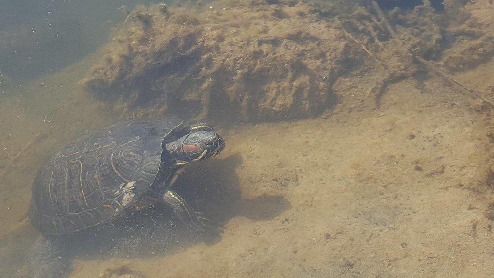 La Mancha turtle.jpg