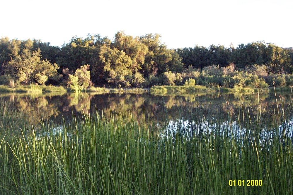 ponds at sunset.JPG