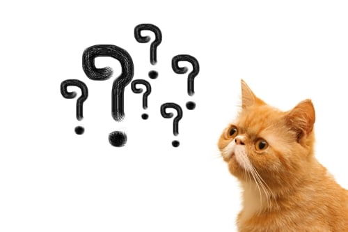 cat-and-question-marks.jpg