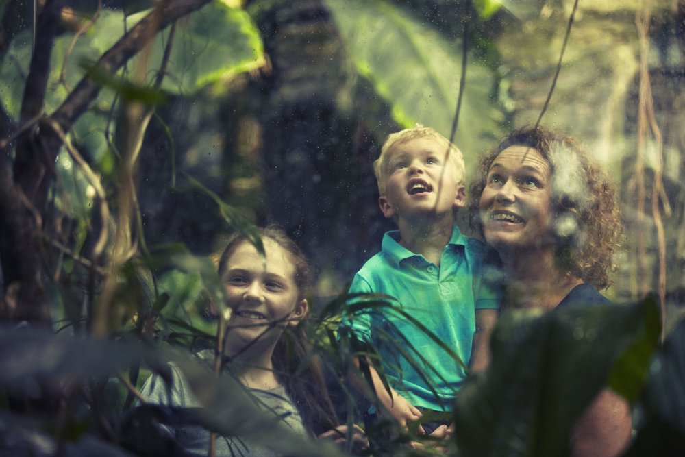 Universeum rainforest (Image credit:Kim Svensson/Göteborg & Co)