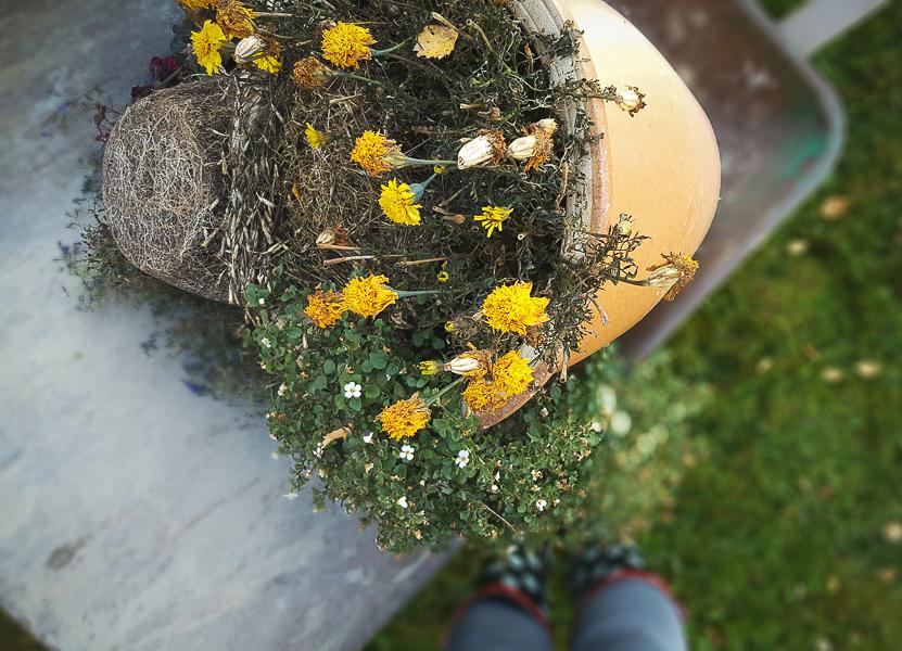 kruka vissna blommor