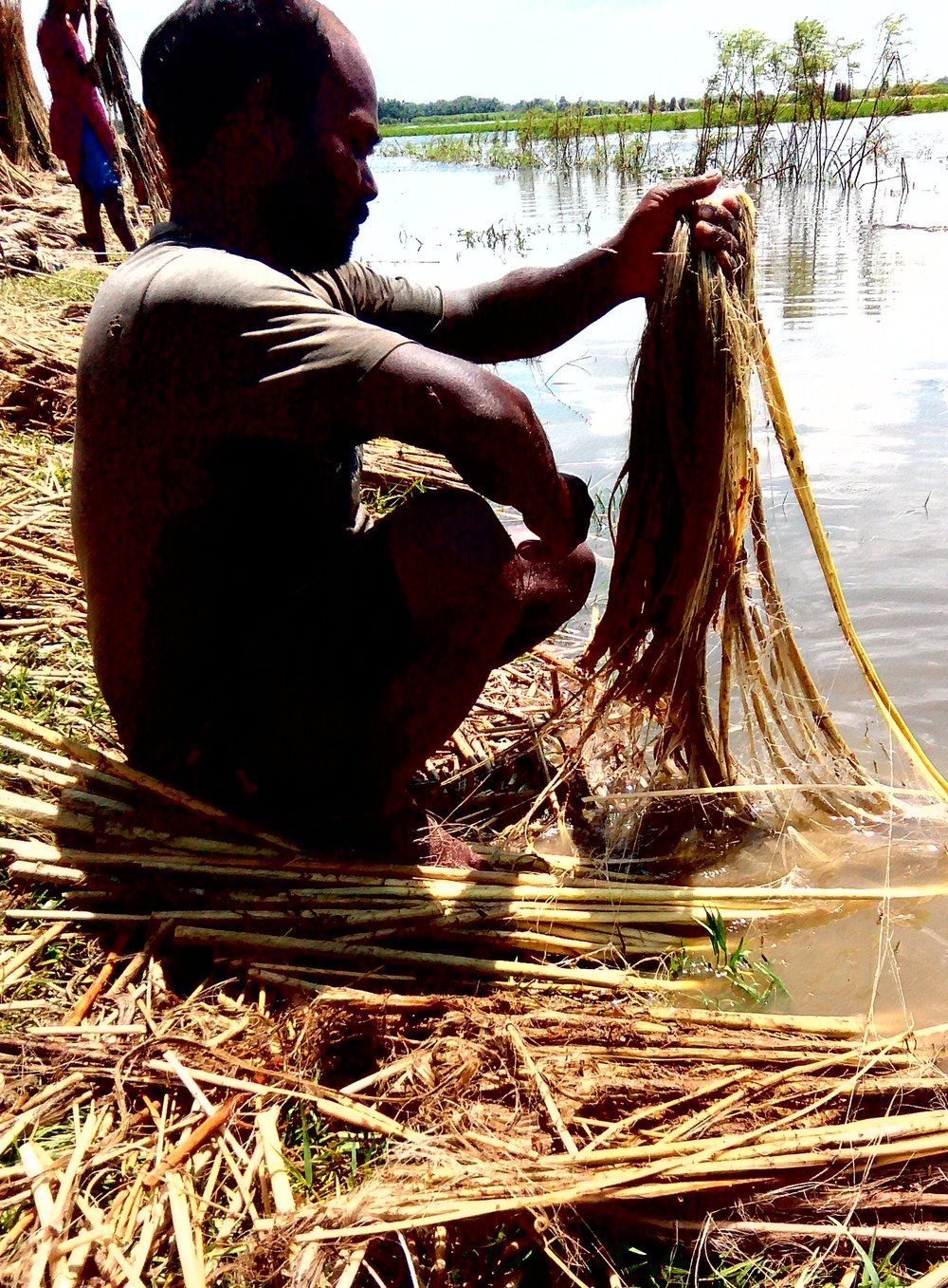 A farmer harvests jute in a village. Credit: Zaheeb Ajmal