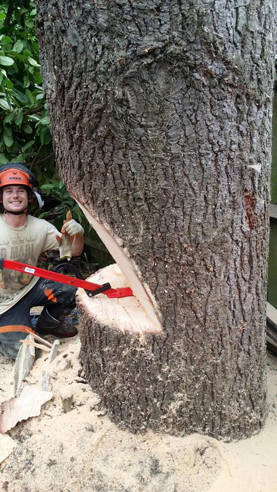 Taylors tree services JJ chopping tree.jpg